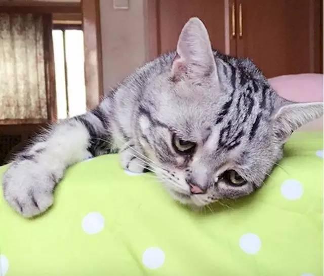 猫头像可爱伤感